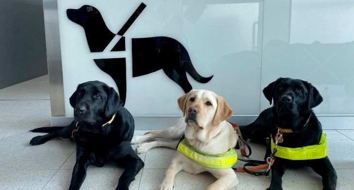 Paw-fect improvements at Perth Airport